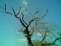 reachtree.jpg